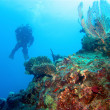 Stock Photo: Diving in Red Sea