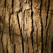 Bark — Stock Photo #23349712