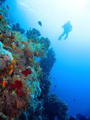 Diving in Red Sea — Stock Photo