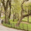 Central Park, NY — Stock Photo #23373612