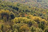 Forest — Stock fotografie