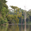 Ox Bow lake, Borneo — Stock Photo