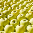 Apples — Stock Photo #26313837