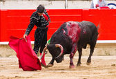 Morante bullfighting in Barcelona — Stock Photo