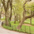 Central Park — Stock Photo #34508149