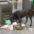 Dog eating litter — Stock Photo #36429633