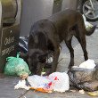 Dog eating litter — Stock Photo #36429701