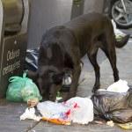 Dog eating litter — Stock Photo #36429701