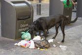 Dog eating litter — Foto de Stock