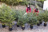 Fir tree fair in Espinelves, Spain — Stock Photo