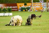 Horse exhibition — Stockfoto