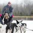Dogs sled racing — Stock Photo