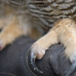 Owl Talons — Stock Photo