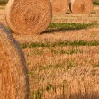 Wheat — Stock Photo #33500175