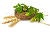 Bread spikelets hop — Stock Photo