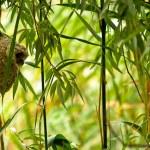 Bird's Nest Remiz pendulinus — Stock Photo