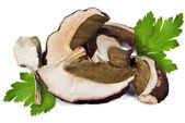 Dried porcini mushrooms — Stock Photo