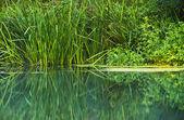 Overgrown shore — Stock Photo