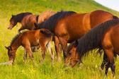 Лошади — Стоковое фото