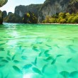 Tropical beach with clear green water and a bunch of fish — Stock Photo #43433179