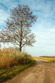 Autumn landscape with a road and tree — Stock Photo