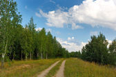 Road in the forest in summer — Stock fotografie