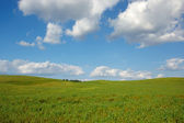Summer landscape with meadow and blue sky — Stock fotografie