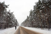Winter road and the forest in snow — Stock Photo