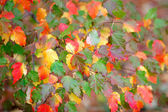 Many colored autumn leaves — Stock Photo