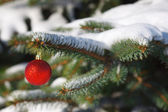Red ball on the Christmas tree with snow — Stock Photo