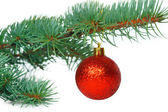 Red ball on the Christmas tree — Stock Photo