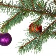 Stock Photo: Red and violet balls on branch of Christmas tree