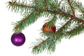 Red and violet balls on the branch of Christmas tree — Stock Photo