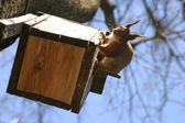 Squirrel and birdhouse on the tree in spring — Stock Photo