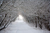 Landscape with road through the winter forest — Foto Stock