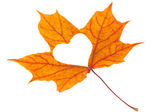 Yellow maple leaf with heart shape — Stock Photo