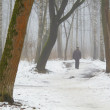 February grove in fog and melting snow — Stock Photo #40739629