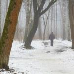 lutego Gaj we mgle i topnienie śniegu — Zdjęcie stockowe #40739629