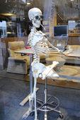 骨架 — 图库照片