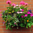 Hanging basket — Foto Stock