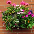 Foto Stock: Hanging basket