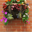 Hanging basket with bedding plants — Stock Photo
