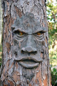 Face on a tree — Stock Photo