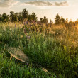 Dawn in the field — Stock Photo