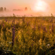 Stock Photo: Dawn in field