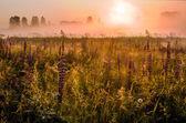 フィールドでの夜明け — ストック写真