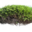 Stock Photo: Green bush