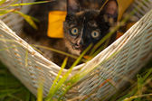 Black cat in a basket — Stock Photo
