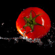 Tomato and water splashes — Stock Photo