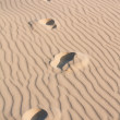 Footprints in the Sand — Stock Photo